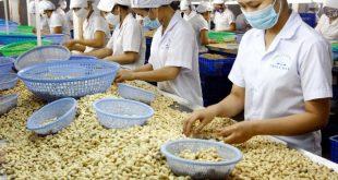 """Nước ta có cơ hội trở thành """"cashew hub"""" thế giới"""