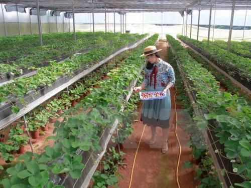 Sản xuất nông nghiệp công nghệ cao chứ chưa phải là nền nông nghiệp số