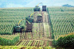 Chính sách về phát triển nông nghiệp sạch còn nhiều điểm bất cập