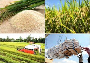 Xuất khẩu gạo không còn là nguồn chủ lực của ngành nông nghiệp Việt Nam