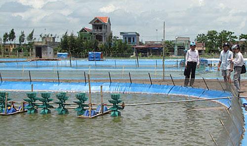 Nuôi trồng thủy sản cần chú ý đến nguồn nước và thức ăn