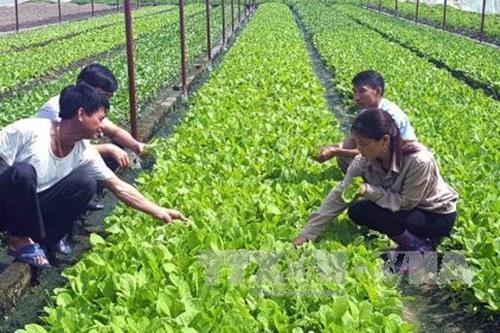 Liên kết vùng mang lại hiệu quả cho quy hoạch nông nghiệp