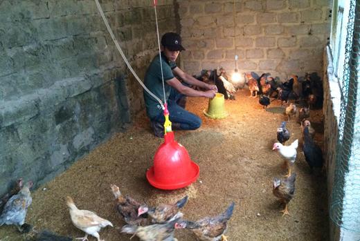 Người nuôi cần giữ ấm cho vật nuôi