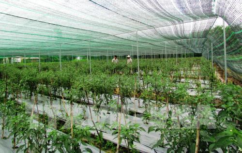 Tạo hệ sinh thái khởi nghiệp trong nông nghiệp