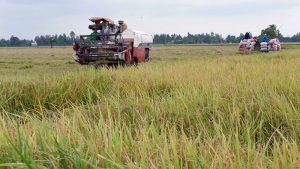 Tập trung ruộng đất để tạo điều kiện tái cơ cấu sx ngành nông nghiệp VN
