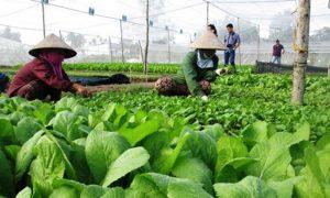 Thủ tướng: Hoàn thiện thể chế, cơ chế phát triển nông nghiệp Việt Nam
