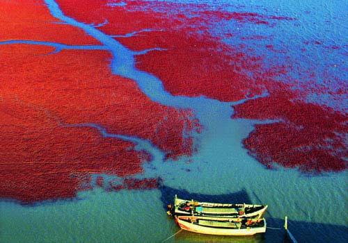 Nguyên nhân gây ra hiện tượng thủy triều đỏ