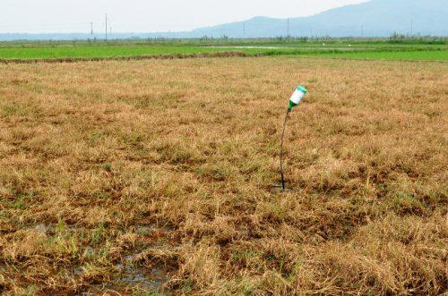 Những nguy hại khi lạm dụng thuốc bảo vệ thực vật trong nông nghiệp