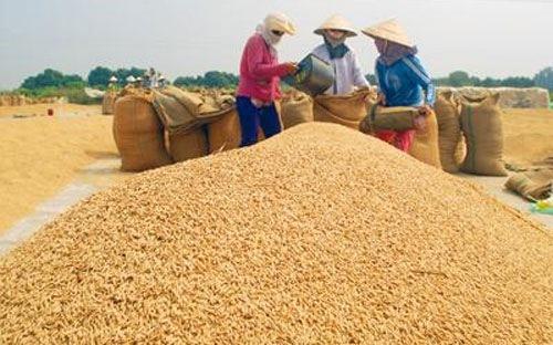 tphcm đề phòng giá gạo biến động do hạn hán