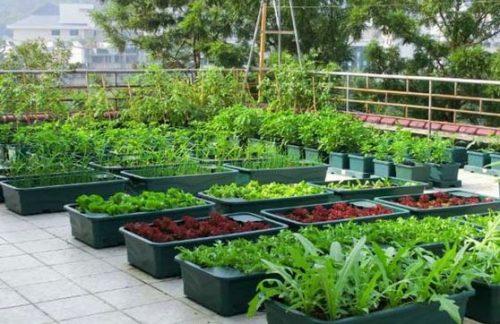 Kết quả hình ảnh cho cây trồng trên sân thượng