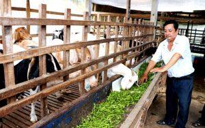 Giá trị kinh tế caotừ các phụ phẩm nông nghiệp
