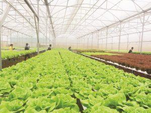 Mô hình ứng dụng nông nghiêp cao tại Việt Nam