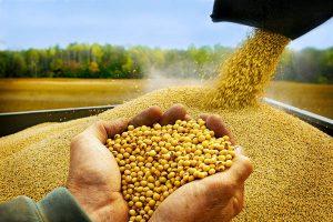 Trung Quốc đã chính thức hủy bỏ nhập khẩu đậu tương của Mỹ