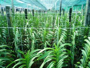 Nhiều DN Nhật sẽ đầu tư vào nông nghiệp công nghệ cao tại Việt Nam