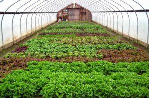 126 mô hình nông nghiệp công nghệ cao
