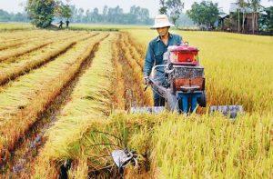 Dòng vốn FDI vào lĩnh vực nông nghiệp Việt Nam còn hạn chế