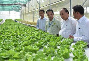 """Ngành rau củ quả tại Việt Nam nhìn từ đơn """"đặt hàng"""" của Thủ tướng"""