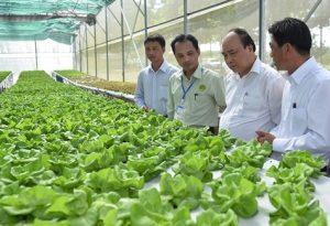 Đưa nông nghiệp thành ngành kinh tế có giá trị vượt trội