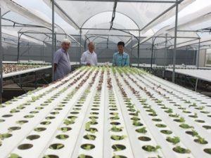 Để thu hút vốn đầu tư cần thúc đẩy phát triển nông nghiệp công nghệ cao