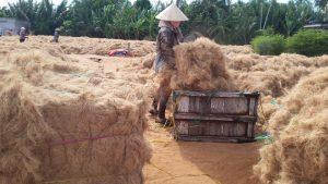 Thu nhập tiền tỉ nhờ vào xuất khẩu từ các phụ phẩm nông nghiệp
