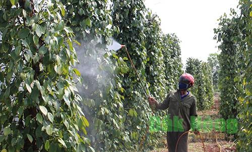 Khi cây được tưới đủ và hấp thụ đủ sẽ đem đến năng xuất cao