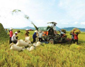 Cơ hội cho ngành Nông nghiệp cất cánh