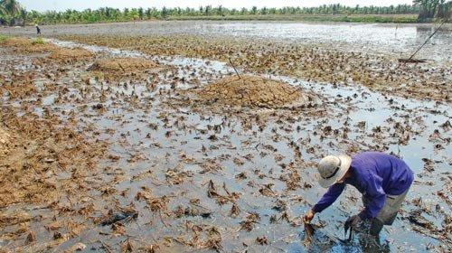 HƯớng dẫn cách cải tạo đất bị nhiễm mặn