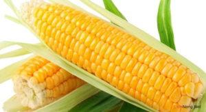 Ngô ngọt - loại cây ngắn ngày cho hiệu quả kinh tế cao
