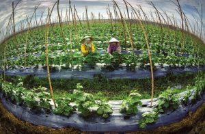 4 lĩnh vực nông nghiệp Việt Nam kêu gọi vốn đầu tư từ nước ngoài