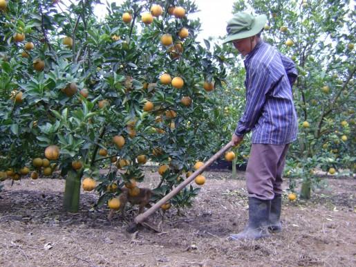Làm trang trại nông nghiệp sẽ được hỗ trợ 50% chi phí