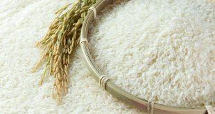 Dù mới tham gia thị trường xuất khẩu nhưng gạo Campuchia đã có những thành công vang dội