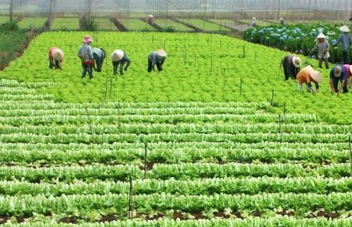 Tọa đàm: Hướng đi nào cho nông nghiệp Việt Nam