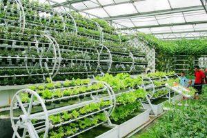 Như thế nào thì được xem là sản xuất nông nghiệp sạch?