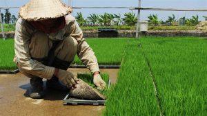 Giải pháp diệt sâu bệnh, bảo vệ đất trồng