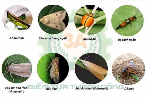 Một số loại côn trùng thường gây hại cho cây trồng
