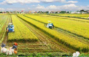 Nhật Bản đầu tư mạnh vào nền nông nghiệp Việt Nam