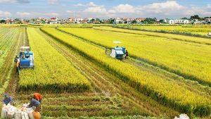 Những tiềm năng - cơ hội trong lĩnh vực nông nghiệp Việt Nam trong năm 2019