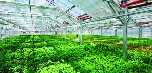 """Xác định những """"nút thắt"""" trong nông nghiệp công nghệ cao"""