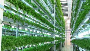 Ưu tiên hỗ trợ doanh nghiệp phát triển nông nghiệp Việt Nam