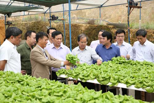 Phó Thủ tướng Vương Đình Huệ thăm khu nhà sản xuất rau bó xôi công nghệ cao