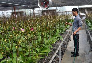 Nông nghiệp công nghệ cao và công nghệ số : Lộ trình không thay đổi