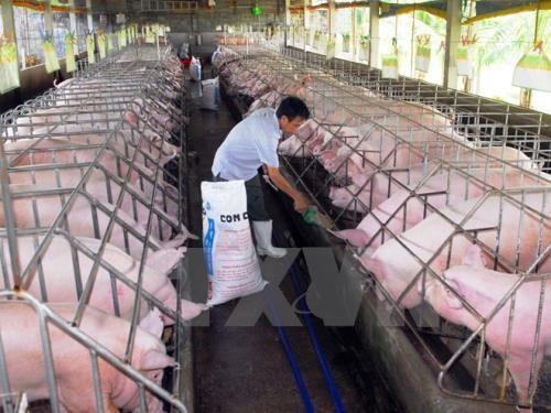 Muốn bền vững thì chăn nuôi phải phát triển theo mô hình chuỗi