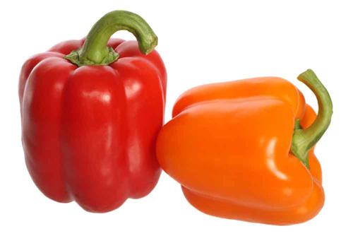 Cách trồng cây ớt chuông trong chậu - đẹp nhà, ngon cơm