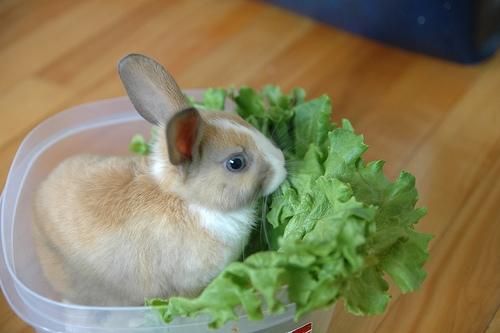 Cần thường xuyên phòng bệnh cho thỏ