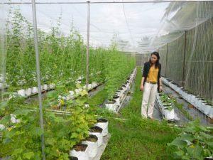 Nông nghiệp công nghệ cao và công nghệ số