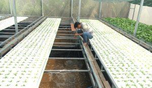 Dự án nông nghiệp ứng dụng công nghệ cao khác là dự án áp dụng các công nghệ được tích hợp từ thành tựu khoa học
