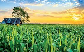 Nông nghiệp Việt Nam: Cơ hội tỏa sáng thời TPP