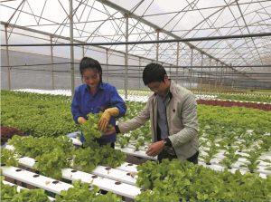 Hà Nội không thể đi trước, về sau về nông nghiệp công nghệ cao