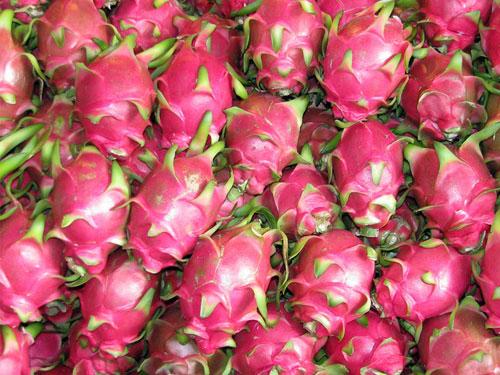 Những trái thanh long này hiện được bán với giá cao ngất ngưởng tại Nhật