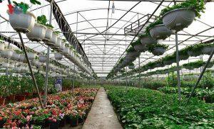 Trở thành tỷ phú nhờ trồng hoa cảnh